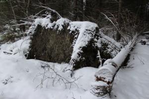 Tapaninpäivän myrsky kaatoi Littoistenjärven pohjoispuolen metsästä runsaasti puita, mikä lisäsi alueen arvoa entisestään.