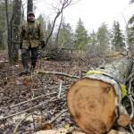 Ihasvuoren kupeessa asuva Mikko Sallinen on pöyristynyt maanantaina ja tiistaina tehtyjen raivaustöiden laajuudesta. Kaupunki ohjeisti Sallista merkitsemään ne puut, jotka hän haluaisi ehdottomasti säästettävän. Ainakin kymmenkunta merkittyä puuta on kaadettu.